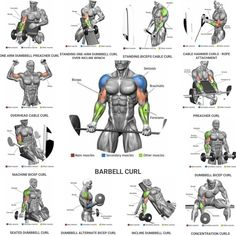 Bicep And Tricep Workout, Abs And Cardio Workout, Gym Workouts For Men, Gym Workout Chart, Workout Routine For Men, Gym Workout For Beginners, Gym Workout Tips, Chest Workouts, Strength Workout