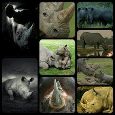 The Happy Rhinos...