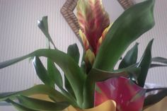 """""""My son gave this totally cool plant to me, and so far, it's still growing beautifully""""   * thereallinda"""
