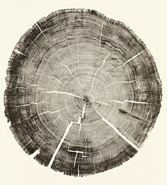 """Cedar Pole, 2011 23 1/2 x 22 1/8 inches """"An arborist friend brought me this cut telephone pole. We were intrigued by the extremely tight growth rings. From start to finish, it was very challenging to print this piece. Every step—from raising the grain to applying the ink to pressing and printing the contours—had to be meticulous in order to clearly read each ring."""" From Woodcut by Bryan Nash Gill"""