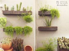 Mi cesta de mimbre | We love: Plantas en Margarita se llama mi amor. | http://www.micestademimbre.com
