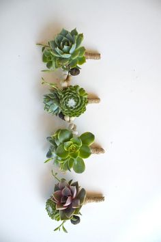 Double Succulent Boutonniere Sets