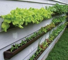 RAIN GUTTERS: Don't have the yard space for a garden?  Attach rain gutters to the side of your house to create a lovely herb and salad garden. Simply fill with topsoil and get planting. These gutter planters are perfect for herbs as well as lettuce, and any other vegetables that have shallow roots and don't spread out too much.