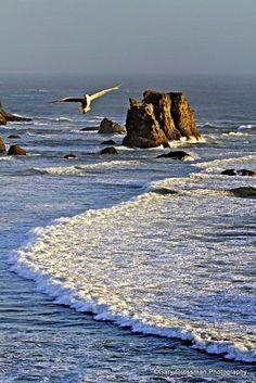 Oregon Islands Beach