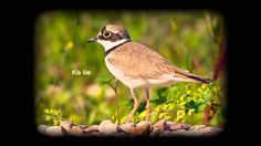 Madárhangok Bird Tree, Birds, Marvel, Youtube, Music, Animals, Holidays, Movies, Musica