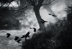 The Crows by Alex Saberi