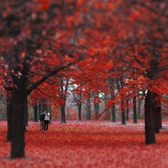 Autum in High Park, Toronto Enchanted Wood, Parks Canada, Flamboyant, Toronto Canada, Canada Travel, View Image, East Coast, Cool Photos, Amazing Photos