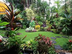 Dennis Hundscheidt's tropical garden, Queensland … great! – Dennis Hundscheidt's tropical garden, Queensland … great! Tropical Garden, Tropical Landscaping, Patio Garden, Tropical Backyard, Backyard Garden, Garden Images, Balinese Garden, Small Tropical Gardens, Tropical Landscape Design