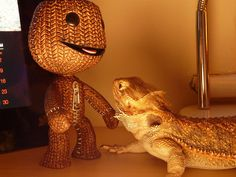 Pixel the bearded dragon meets sackboy