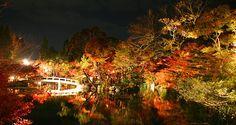 Eikando Temple (Kyoto) Fall Illumination