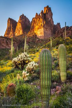 Superstition Mountains by Bob Miller Landscape Photos, Landscape Art, Landscape Photography, Nature Photography, Southwest Art, Desert Plants, Cacti And Succulents, Nature Pictures, Amazing Nature