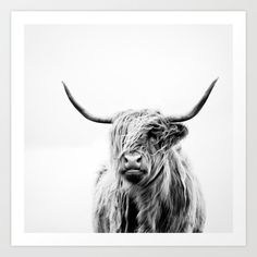Art Print featuring Portrait Of A Highland Cow by Dorit Fuhg