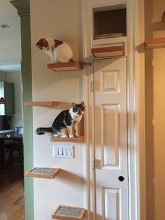 Cat Ledge. (Cantilevered Cat Shelf, Inlay Sisal Steps, Oiled Oak and Knotty Pine Platform).SHELF ON MEG DOOR