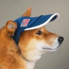 I actually bought one of these things for my dog at a street fair because his eyes water in bright sunlight. Only problem is, he doesn't like it - shakes his head making the visor turn so that it doesn't shade his eyes anymore.  Anyone want an extra-small sun visor for free, contact me - LOL