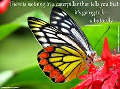 Image result for Common Jezebel Butterfly