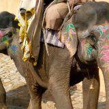 Paseo-en-elefante