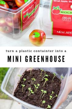 """Let's keep the """"upcycling"""" chain going forward by turning Rockit apple plastic containesr into a miniature seed-starter greenhouse! Diy Mini Greenhouse, Recycling Bins, Food Containers, A Food, Turning, Repurposed, Activities For Kids, Miniature, Packaging"""
