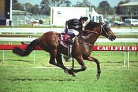 Diatribe was foaled in 1996 and was by Brief Truce out of the mare Gabbing Gloria (by Desert Wine). From 33 starts he had 5 wins, 5 seconds and 3 thirds and won $2.326,030 in prize money. His main win was in the 2000 Caulfield Cup.
