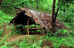 Jungle, shelter