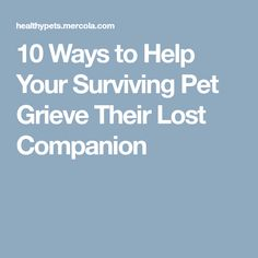 10 Ways to Help Your Surviving Pet Grieve Their Lost Companion