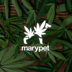 Marypet Cannabis leaf Dog by Gregory Grigoriou.