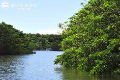 西表島のジャングルクルーズ…  日本最大面積を誇るマングローブが広がる仲間川天然保護区域(天然記念物)を遊覧船に乗って巡るツアー