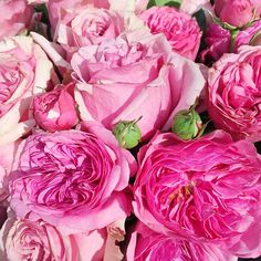 fleur #happymonday