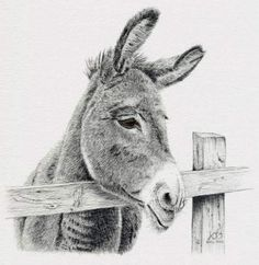 Animal Pencil Drawing Commission Donkey - Andrew Brooks Artist