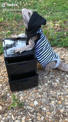 I Love My Bearded Dragons. A website page for all our adorable bearded dragons handmade items and daily moment pics. Bearded Dragon Supplies, Cute Lizard, Bearded Dragon Cute, Pet Lizards, Cute Reptiles, Super Cute Animals, Pet Home, My Animal, Amor