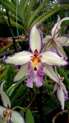 #Orchids - file.php (450×800)    http://dennisharper.lnf.com/