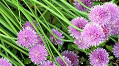 Good Housekeeping, Hobby, Tutorial, Plants, Plant, Planets