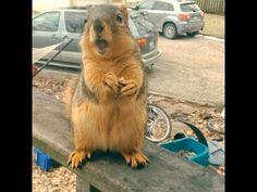 Fast Talking Squirrel Verbally Expresses His Gratitude