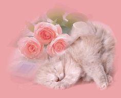 glitter gifs photo: kitten pink glitter roses kittenpinkgitterroses.gif
