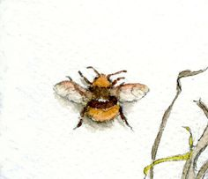 Although they can make you jump, insects can also provide a study in nature's colors and designs. Learn how to draw and paint insects with this tutorial.