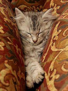 Adorable cute cats having a little nap... #cutecats #kittens #lovecats #cats