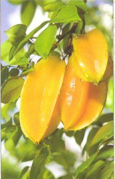 Carambola, también conocida como fruta de estrella, es el fruto de Averrhoa carambola, una especie de árbol originario de India y el sudeste de Asia sub continente. La fruta también se cultiva en zonas tropicales no indígenas como América Latina, el Caribe y Sur Estados Unidos