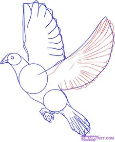 holding a white pigeon pictures - חיפוש ב-Google