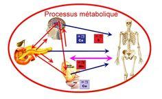 Diabète-Obésité : restaurer l'équilibre métabolique