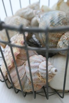 Collection of shells displayed in a wire egg basket!!!
