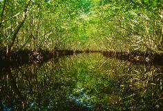 """Natural Surroundings 2""  Mangrove Tunnel - 10,000 Islands"