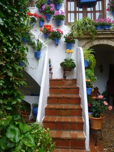 Los Patios Cordobeses Porch Garden, Home And Garden, Cordoba Andalucia, Stairs To Heaven, Casa Patio, Relax, Beautiful Flowers Wallpapers, Flower Wallpaper, Outdoor Rooms