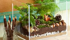 Woodland terrarium on table