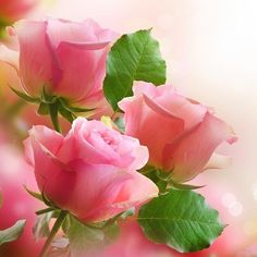 flowersgardenlove: Pretty Roses Beautiful gorgeous pretty flowers