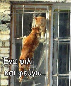 ^= __ Feline Romeo and Juliette Animals And Pets, Funny Animals, Cute Animals, Crazy Cat Lady, Crazy Cats, Chat Kawaii, Image Chat, Photo Chat, Orange Cats