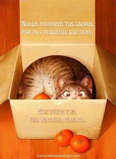 #reflexion #pensamiento #frase #gato #logro #imagen
