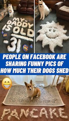 #Facebook #Sharing #Funny #Dogs #Shed