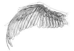 ... Wing Reference on Pinterest | Black angel wings, Angel wings and Wings