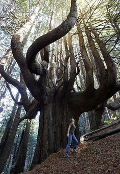 Appreciation for the assets that Mother Nature brings to our lives Moves Me. Enchanted Forest, California.