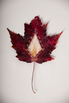 Creative Embroidered Leaf Art By Hillary Fayle Fall Crafts, Arts And Crafts, Leaf Crafts, Arte Linear, Embroidered Leaves, Deco Nature, Textiles, Art Textile, Thread Art
