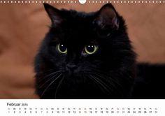 Ragdolls - CALVENDO Kalender . #ragdoll #rassekatzen #katzen #Kalender #calvendo